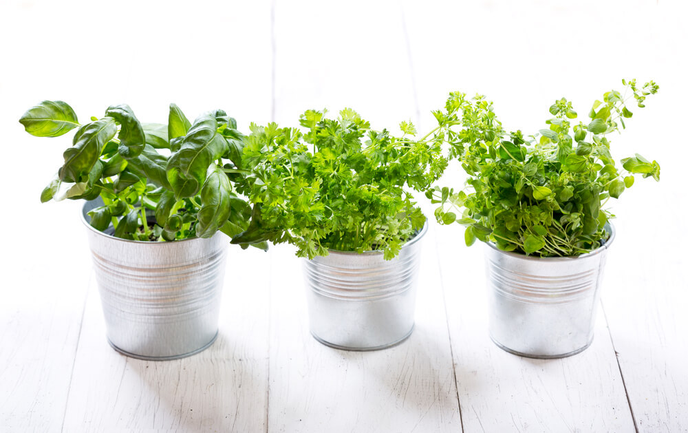 3 potted herbs