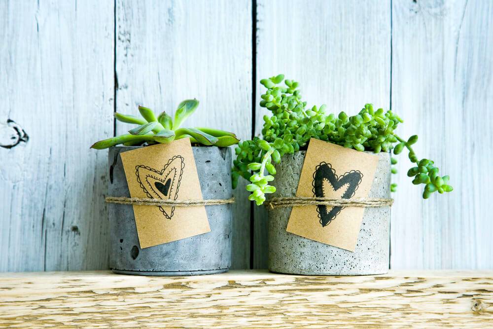 Potted plants and handmade tags