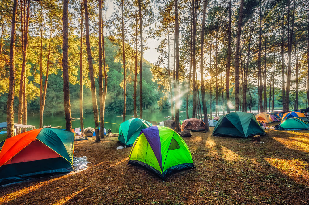 Multiple tents in the forest